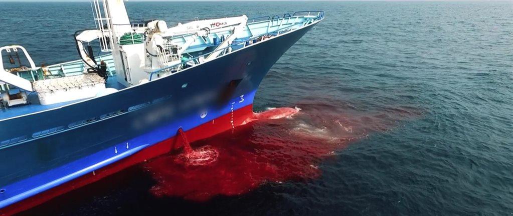 SEASPIRACY: PRAVÁ TVÁØ UDRŽITELNÉHO RYBOLOVU